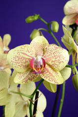 Edwin 3 Flowers E Malone-6.jpg