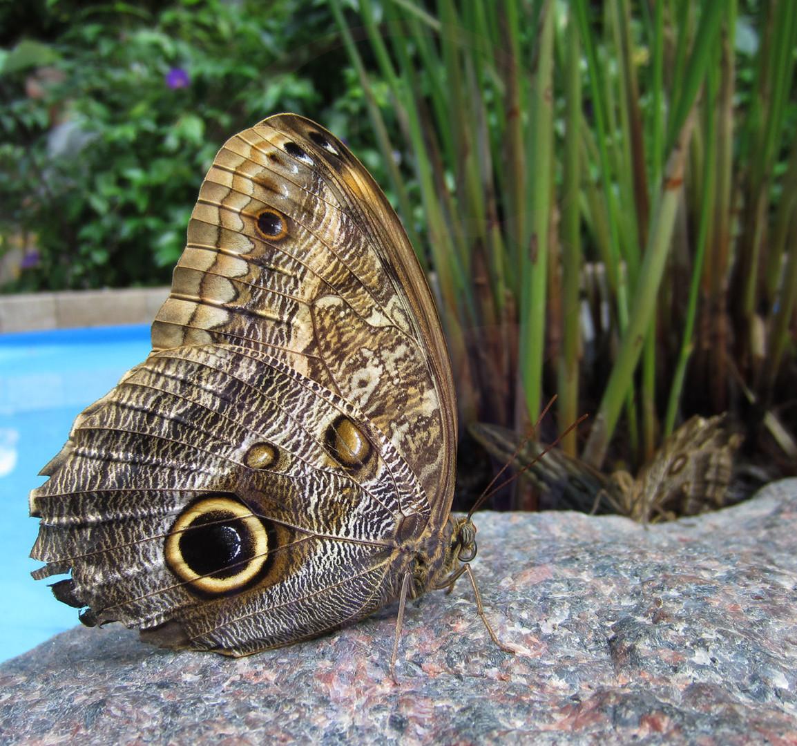 Detroit Zoo - 2011 - Butterfly