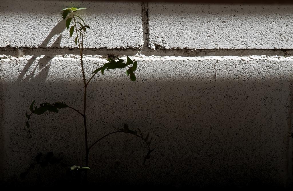 LUZ EN LA SOMBRA - Vicky Ocaña fotografia