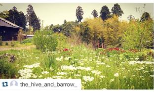 The Hive and Barrow【レモンタルト/オーブンパイ他/「5/9Youは何しに日本へ」出演】