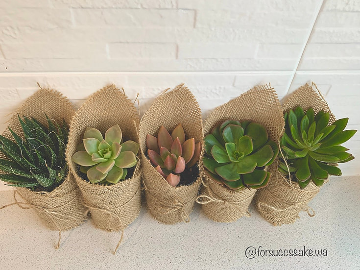 Large Hessian Wrapped Pot With Rosette Succulent