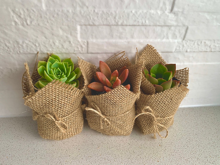 Small Hessian Wrapped Pot With Rosette Succulent