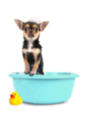 Fido_Fizzies_Dog_Bathtub_Duck (1).jpg