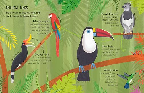 Rainforest 10-11.jpg