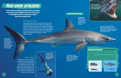 Shark-spread2.jpg