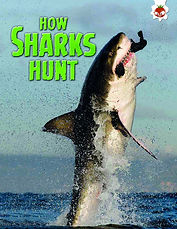 01 How Sharks Hunt UK pb cov v2.jpg