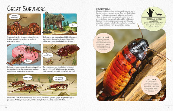 AMazing Insects.jpg