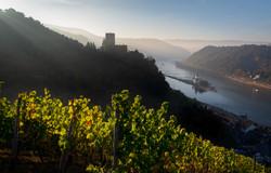 Rhine dawn