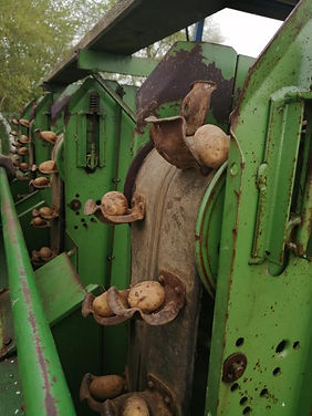 KartoffelernteBuchenhof3.jpeg