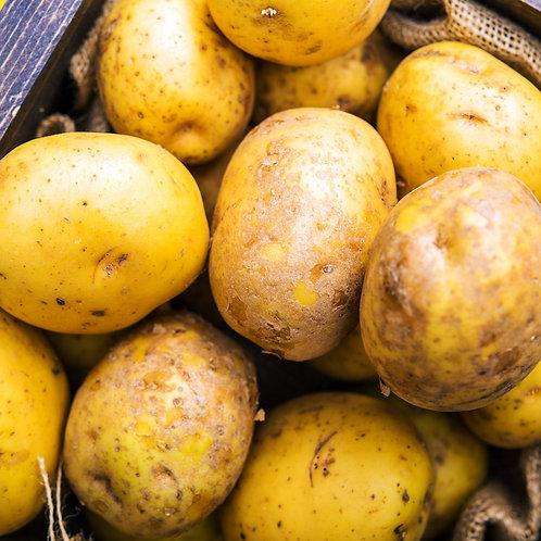 Festkochende BIO Kartoffeln