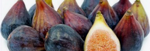 FIGS (BLACK MISSION) (TRAY PACKED)