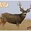 Thumbnail: 48 x 48 Target Skins