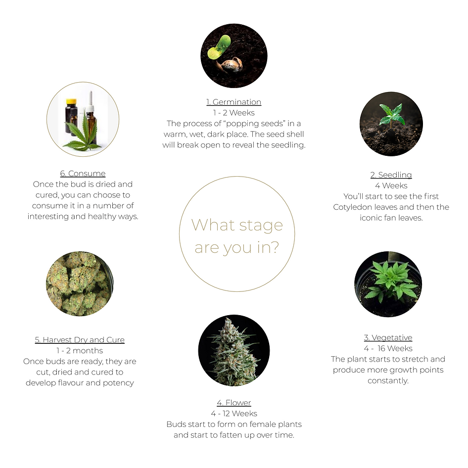 Cannabis Growth Cycle.png