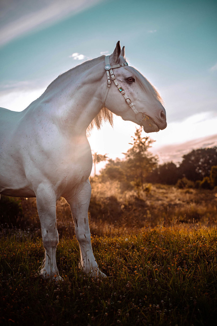 pittsburgh pet and equine photographer