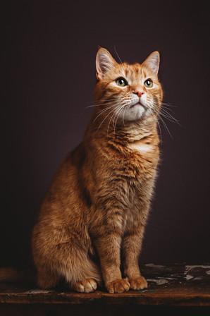 Pittsburgh Pet Photographer