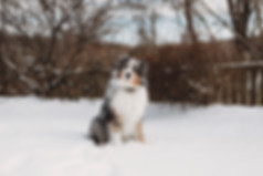 Daisy-Winter December2017-Portrait2.jpg