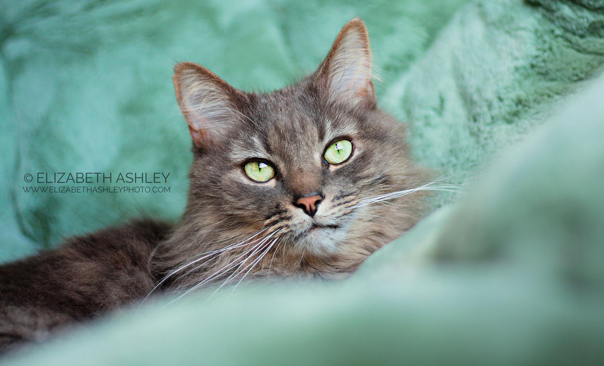 Cat Portrait Photographer Pittsburgh