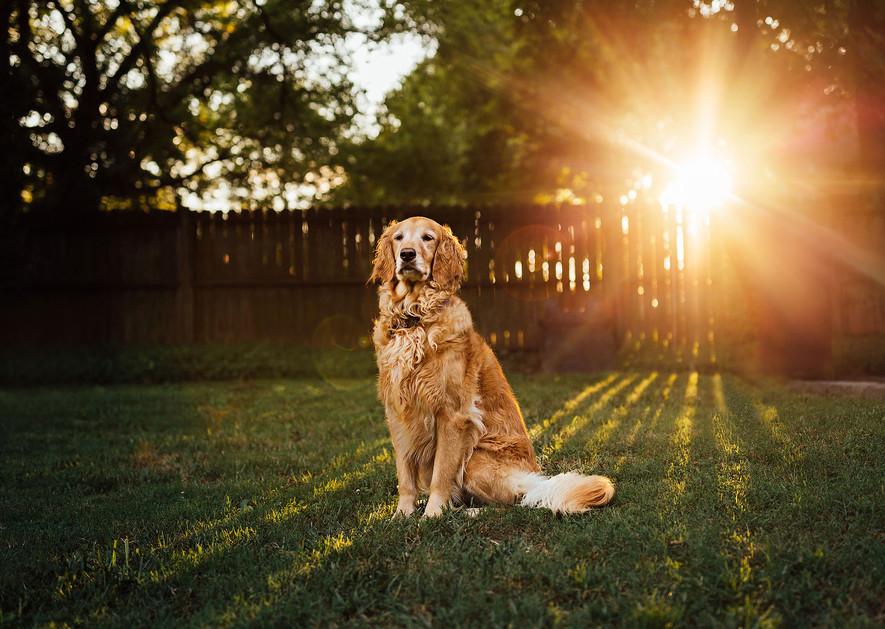 Pittsburgh Pet Photographer Elizabeth As