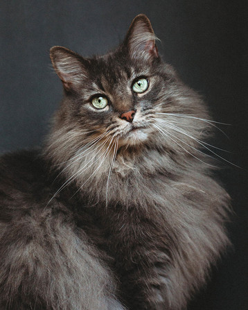 Pittsburgh Pet and Cat Photographer