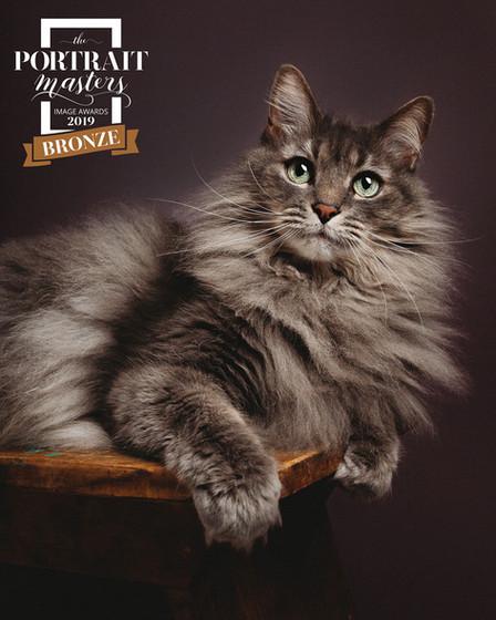 Cat Photographer Pittsburgh PA Pet Portr