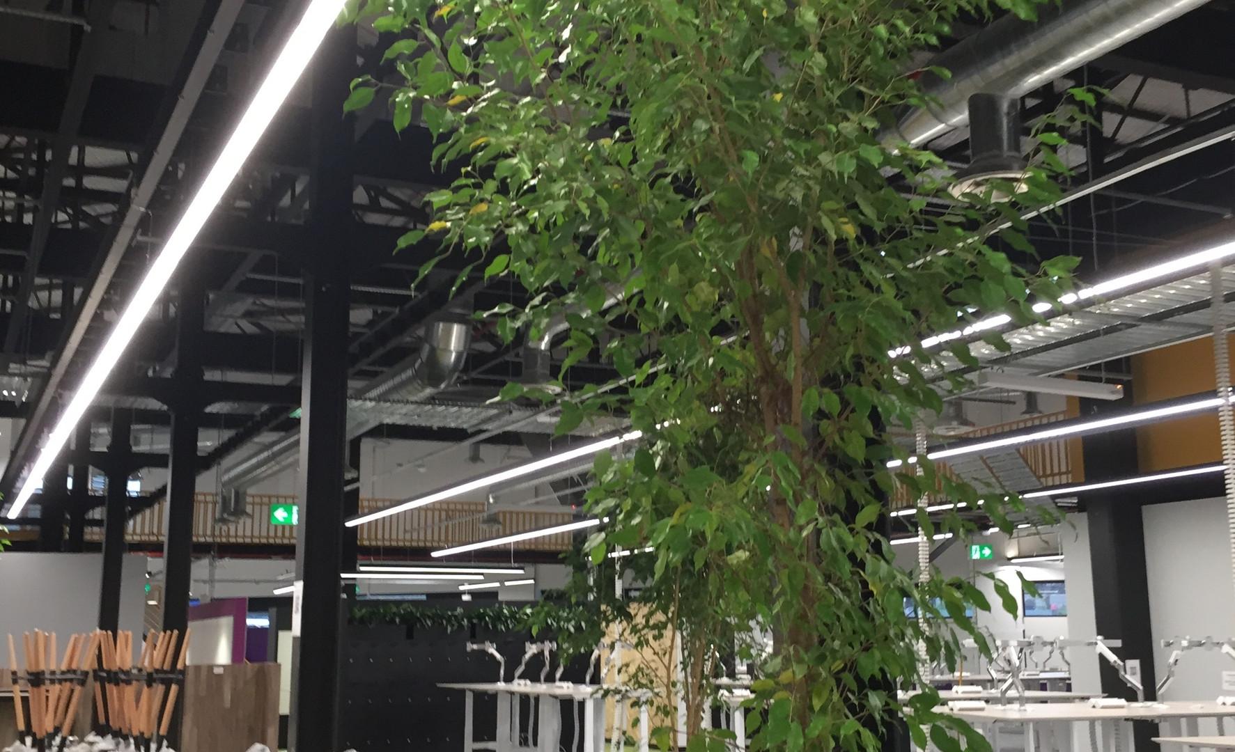 Tree by Plantera