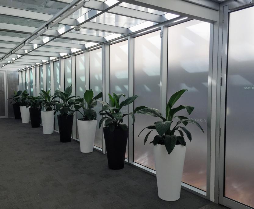Corridor by Plantera