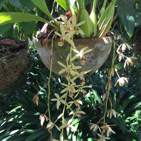 Orchid in hanging basket