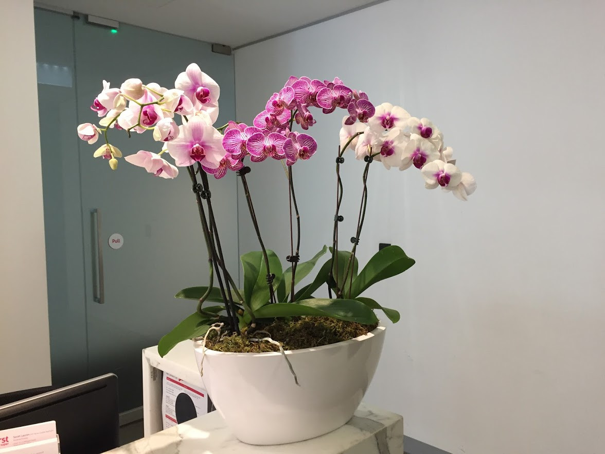 Orchid bowl by Plantera
