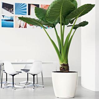 Classic planter