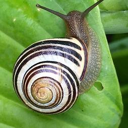 snailonleaf.jpg
