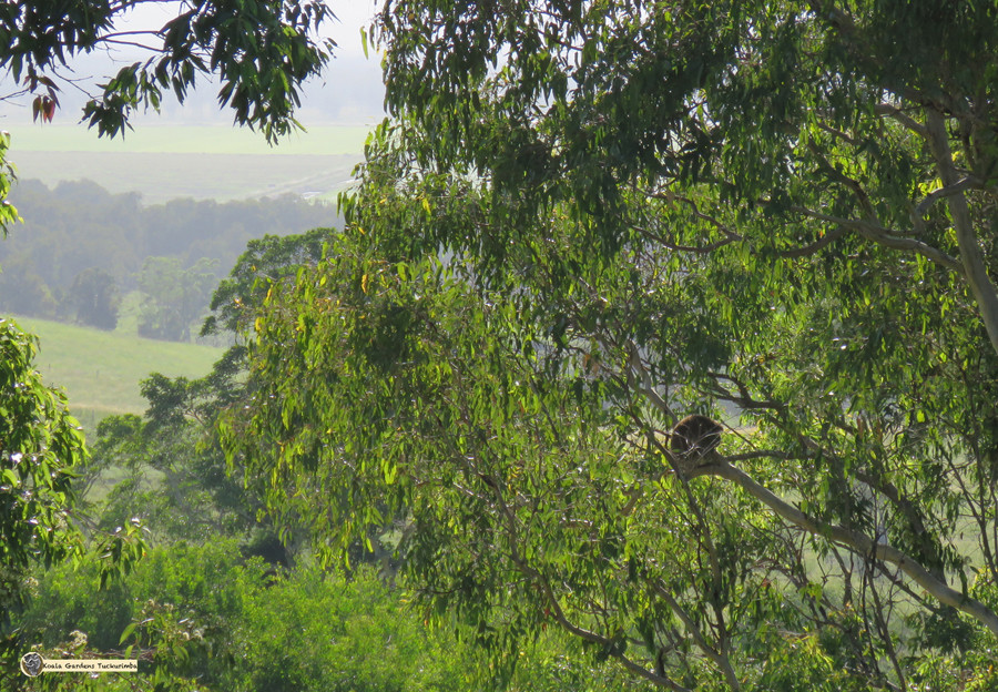 Native habitat regeneration