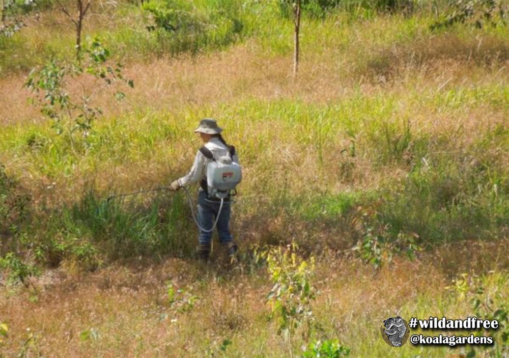 Property Management 05 - Spot Spraying