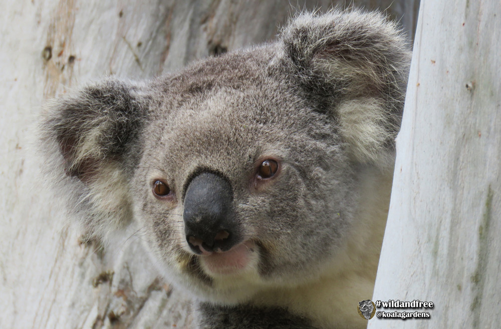 Property Management 01 - Feature Koala