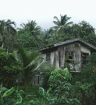森の木造住宅