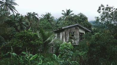 Casa de madeira na floresta