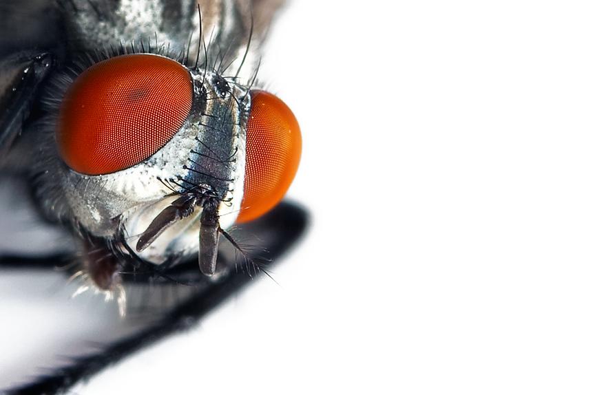 Extreme Macro Photography - צילום מאקרו אקסטרים - צילום מיקרו - צילום חרקים עם טבעת הארכה - טיפים צילום - צילום מאקרו עם אקסטנשן טיוב -