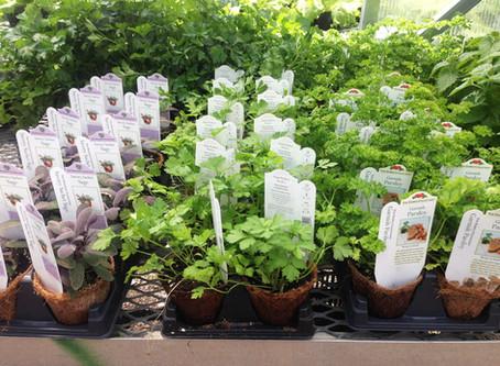 Grow a Container Garden