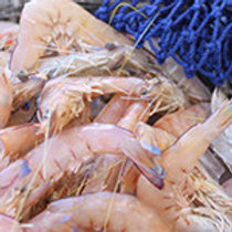1 KG BLUE LEG KING PRAWNS CKD 21/30