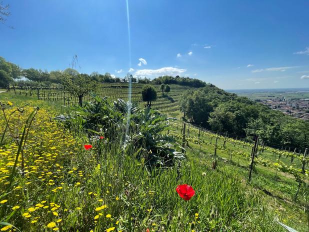 Vista delle nostre vigne terrazzate