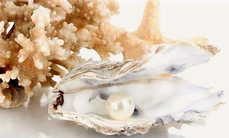 papiers-peints-ouvrez-l-39-huitre-avec-la-perle-isole-sur-blanc_edited.jpg