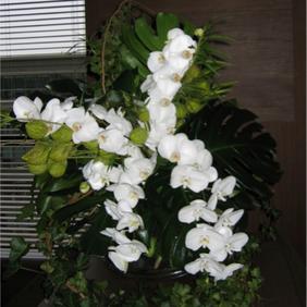 fleurs2.png