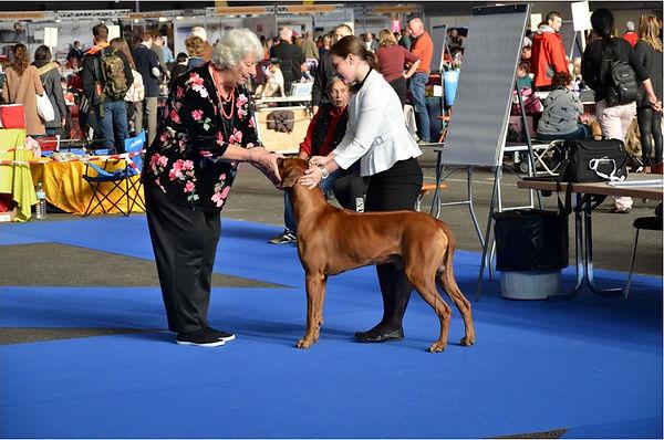 Mezinárodní výstava psů Ženeva 2018. Noby umístění 3x V1, CAC, CACIB, BOB, BIG1.