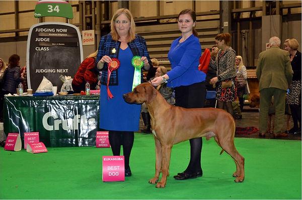Crufts Birmingham 2018. Noby - první místo ve třídě otevřené, nejlepší pes & Dog Challenge Certificate