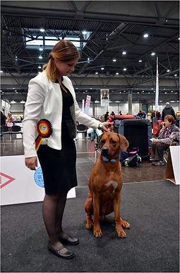 Světová výstava psů Lipsko 2017. Noby umístění V2, res CAC.