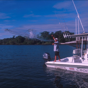 CB196 Carlos netting baitfish.jpg