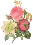 Flower%20Illustration_edited.png