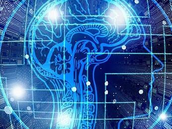 The Brain: The Biggest Sex Organ