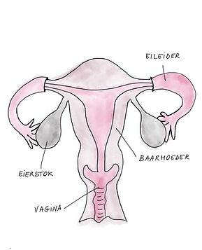 Baarmoeder.jpg