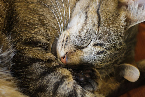 Sleepy Little Kitty_edited.jpg