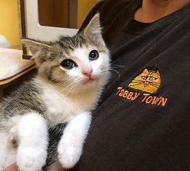 Tabby Town Kitten 2.jpg